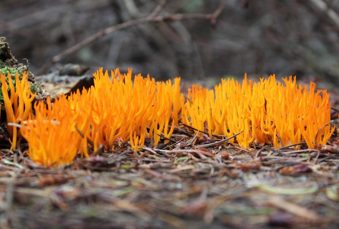 hi-vis fungus